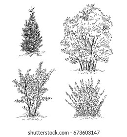 Hand drawn set of trees and shrubs. Sketch, vector illustration isolated on white background.