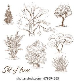 Hand drawn set of trees. Sketch, vector illustration.