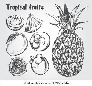 Hand drawn set of tropical fruits - mango, mangosteen, kiwano, pineapple. Vector isolated illustration.
