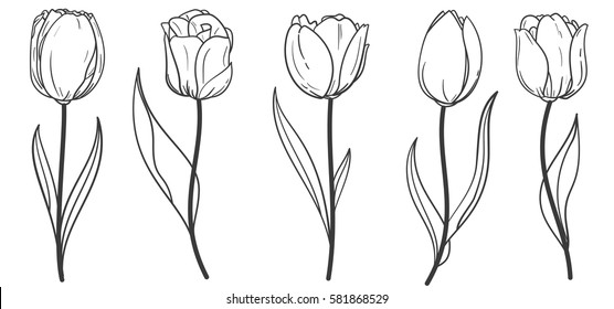 Hand drawn set of tulips branches. Flower isolated on white background. Vintage vector illustration.