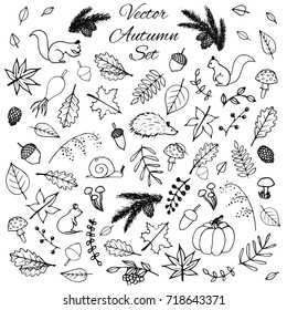 Hand drawn set of vector autumn elements. Includes foliage, rowan berries, acorns, mushrooms, oak and maple leaves, rose hips, squirrels, pine cones and branches, a mouse and a hedgehog.