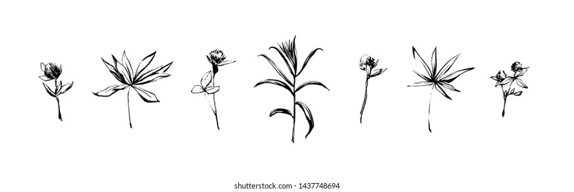 Hand drawn set of wild herbs. Outline plants painting by ink pen. Sketch or doodle style botanical vector illustration. Black isolated on white background.