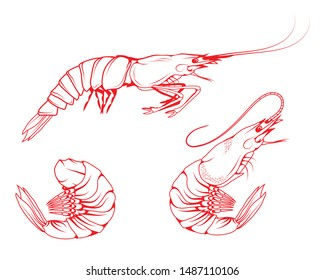 Hand Drawn Shrimp Set. Sea Food. Sea Fish. Shrimp.Tasty Seafood. Ocean Sport Fishing. Fresh Seafood Product. Delicious Baked Shrimp. Fish Meal Diet. Big Best Boiled Shrimp. Fishing. Vector graphics.