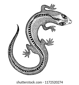 Hand drawn silhouette of a detailed exotic wild lizard. Animal reptile for print and tattoo. Isolated vector nature art.