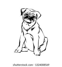 Hand drawn sitting pug puppy dog. Vector sketch black isolated animal pet illustration on white background.