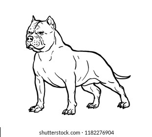 Hand drawn sketch of american bully. Graphical dog isolated on white background. Vector illustration for tattoo and printing.