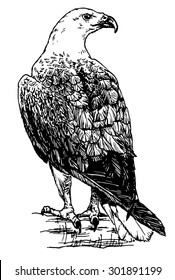Hand drawn sketch of an american eagle perched on a branch