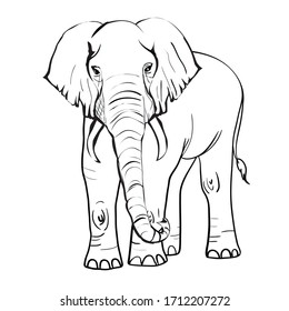 hand drawn sketch of asian elephant illustration done in black ink and isolated on white background