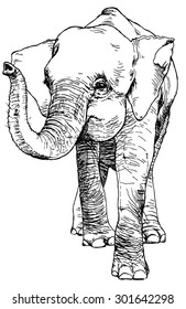 Hand drawn sketch of asian pygmy elephant
