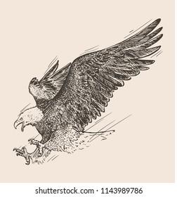 Hand drawn sketch of bald eagle in flight. Vector illustration