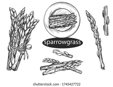Hand drawn sketch black and white coffee set. Vector illustration of asparagus, grass. Elements in graphic style menu of sparrowgrass.