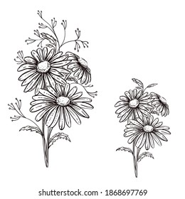 Hand drawn sketch black and white flowers daisy. Vector illustration. Elements in graphic style label, card, sticker, menu, package.