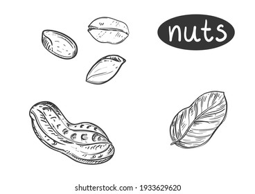 Hand drawn sketch black and white of nuts, peanut, grain, leaf. Vector illustration. Elements in graphic style label, card, sticker, menu, package. Engraved style illustration.