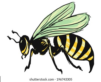 hand drawn, sketch, cartoon illustration of wasp