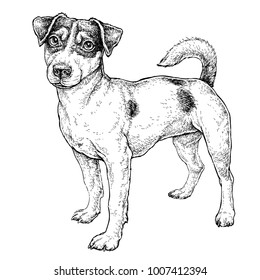 Hand drawn sketch of cute funny Jack Russell Terrier. Vector Illustration