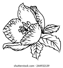 hand drawn, sketch, doodle illustration of spring flower