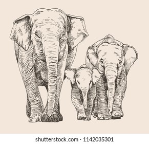 Hand drawn sketch of elephant family walking, front view