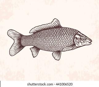 Hand drawn sketch fish. Vector illustration