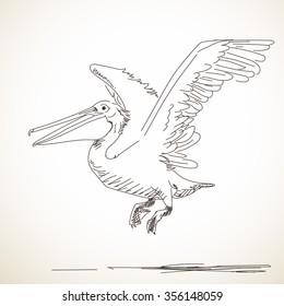 Bird Pelican Drawing Hd Stock Images Shutterstock