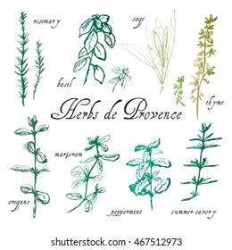 Hand drawn sketch of herbs de Provence.  Rosemary, basil, thyme, sage, peppermint, summer savory, marjoram, oregano labels.  Green shades.