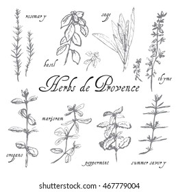 Hand drawn sketch of herbs de Provence. Black and white style. Rosemary, basil, thyme, sage, peppermint, summer savory, marjoram, oregano labels.