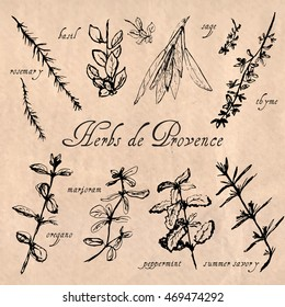 Hand drawn sketch of herbs de Provence. Black and white style. Rosemary, basil, thyme, sage, peppermint, summer savory, marjoram, oregano labels. Paper background.