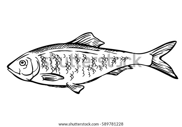 Hand Drawn Sketch Herring Fish Seafood Stock Vector Royalty
