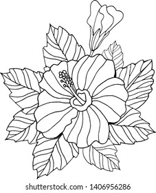 Hand drawn and sketch Hibiscus flower. Black and white with line art illustration.