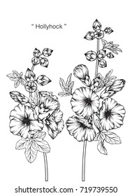 Hand drawn and sketch Hollyhock flower. Black and white with line art illustration.