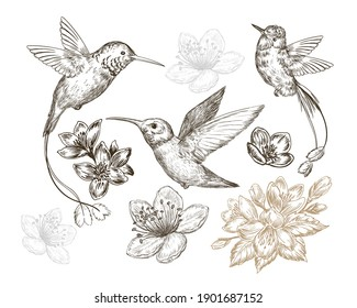 Hand drawn sketch illustration with caliber birds and spring flowers isolated