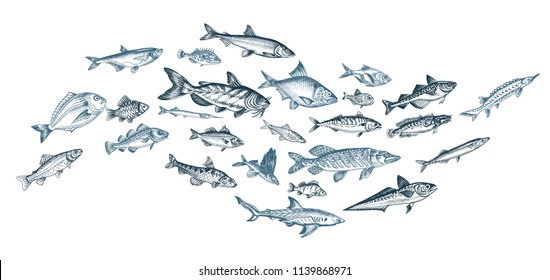 Hand drawn sketch illustration with fish. Wildanimal vector. Restaurant food card for seafood menu.