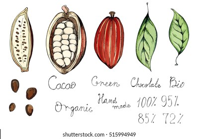 Hand drawn sketch illustration of the fruit of the tree of chocolate, cocoa beans, leaves and lettering chocolate, organic, green, bio, hand made colored vector set
