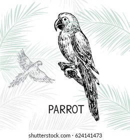 hand drawn sketch illustration a parrot
