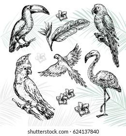 hand drawn sketch illustration Tropical birds