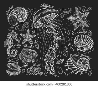 Hand drawn sketch jellyfish, starfish, scallop, conch, coral, mussel, fish, sea horse. Vector illustration