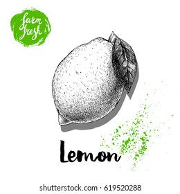 Hand drawn sketch lemon with leaf sticker poster. Vitamin and healthy tropic fruit vector illustration.