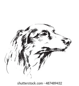 Hand drawn sketch of long haired dachshund dog sleeping or daydreaming