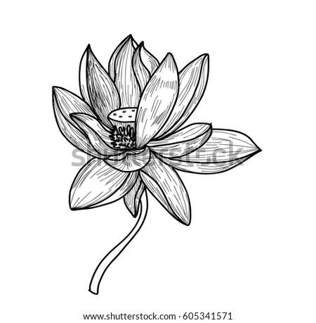 Hand drawn sketch lotus flower stock vector royalty free 605341571 hand drawn and sketch lotus flower mightylinksfo
