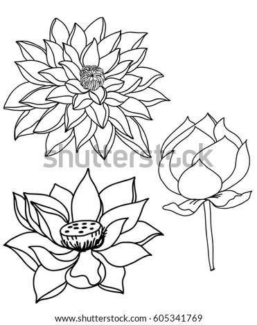 Hand drawn sketch lotus flower stock vector royalty free 605341769 hand drawn and sketch lotus flower mightylinksfo