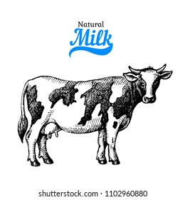 Hand drawn sketch milk products background. Vector black and white vintage illustration of cow