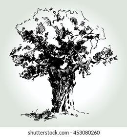 Hand drawn sketch olive tree. For labels, pack. Vector illustration.