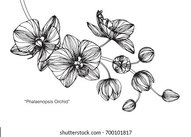 Hand drawn and sketch Orchids flower. Black and white with line art illustration.