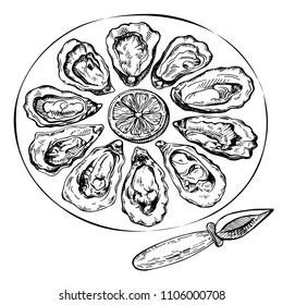 Hand drawn sketch oyster set. Sketch illustration of fresh seafood. Isolated on white background.