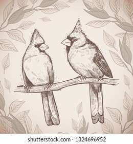 Hand drawn sketch a pair of birds. Beautiful pair of Red Cardinals on a branch in foliage. Grange illustration