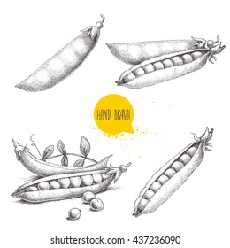 Hand drawn sketch peas sketch set. Vector organic food illustration isolated on white background.