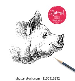 Hand drawn sketch pig head illustration. Isolated profile portrait on white background. Symbol of new year 2019