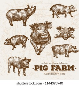 Hand drawn sketch pork and pig meat products set, farm fresh food, black and white vintage illustration, simple drawing