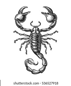 Hand drawn sketch of scorpion. Tattoo animal. Vector illustration