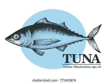 Hand drawn sketch seafood vector vintage illustration of tuna fish. Can be use for menu or packaging design. Engraved style. Retro illustration.