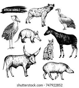 Hand drawn sketch set of animals - shoebill, aardvark, hyena, vulture, okapi, serval, tapir and Watusi cattle. Vector illustration isolated on white background.